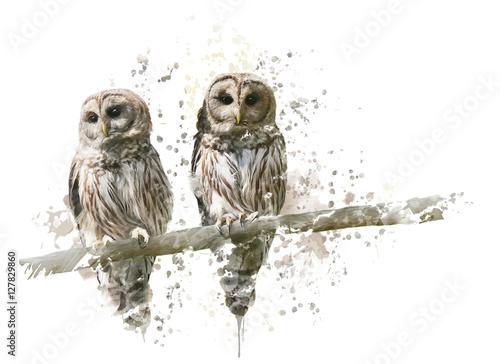 Barred Owls Watercolor