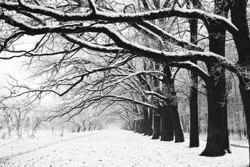 Winter tree trunk in nature in winter