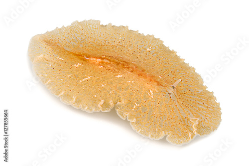 Underwater studio shot of a flatworm isolated on white background.
