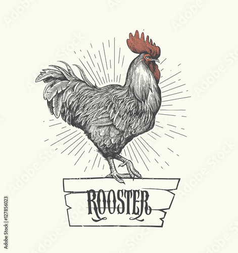 Obraz na plátně Rooster in graphic style, hand drawn illustration
