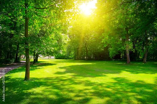 Papiers peints Morning Glory Sunrise in summer beautiful park.