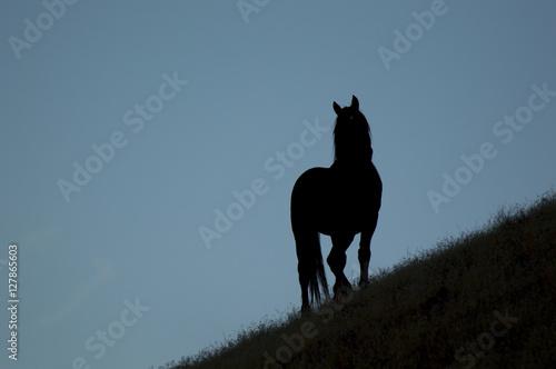 Wild horses on the desert Canvas Print