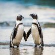 canvas print picture - African penguin walk out of the ocean on the sandy beach. African penguin ( Spheniscus demersus) also known as the jackass penguin and black-footed penguin. Boulders colony. South Africa