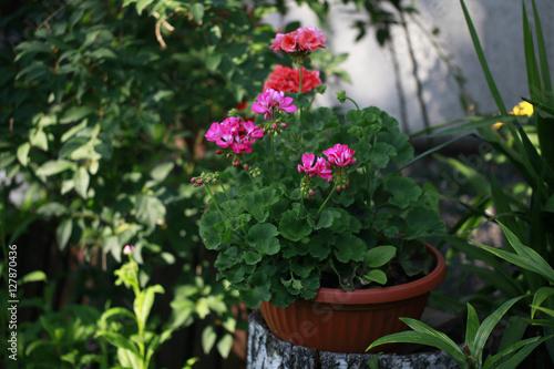 Bajkowy Ogrod Kwiaty W Donicy Kaufen Sie Dieses Foto Und Finden