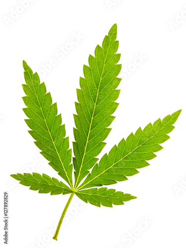 Fotobehang Planten Marijuana leaf isolated