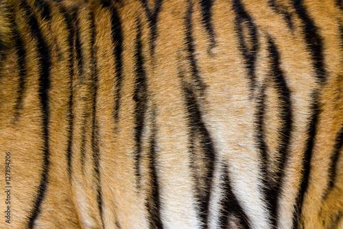 In de dag Tijger Tigerfell in einer Nahaufnahme, als Hintergrundbild