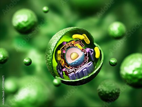 Fotografie, Obraz  Animal cell anatomy on green background. 3D illustration