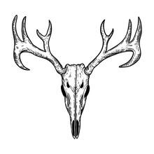 Stylized Deer Skull Sketch Han...