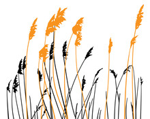 Steppe Grass On White Background