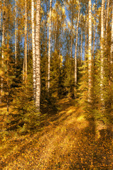 Fototapeta Popularne In the autumn forest