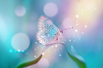 Beautiful white butterfly on white flower buds on a soft blurred blue background spring or summer in nature. Gentle romantic dreamy artistic image, beautiful round bokeh.