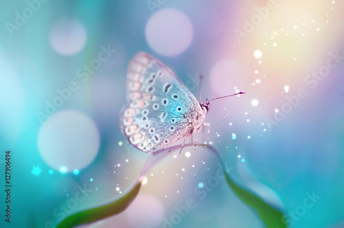 Fotobehang Vlinder Beautiful white butterfly on white flower buds on a soft blurred blue background spring or summer in nature. Gentle romantic dreamy artistic image, beautiful round bokeh.
