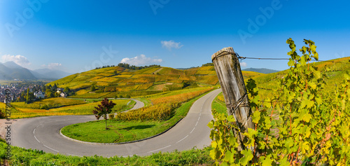 Photo Wine Road, Vineyards of Alsace in France