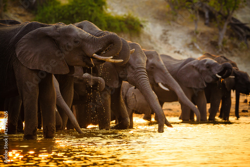 Spoed Foto op Canvas Afrika Elephants in Chobe National Park - Botswana