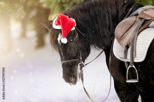 Fototapeta Portrait of the saddled horse in a cap in a a red Santa Claus hat obraz
