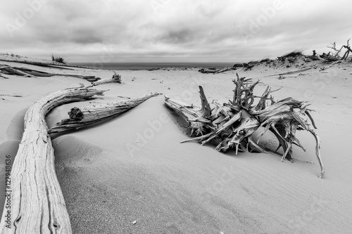 Photo  Ghost Forest of Sleeping Bear Dunes, Michigan