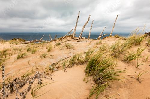 Fotografia, Obraz  Ghost Forest of Sleeping Bear Dunes, Michigan