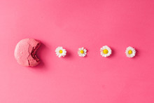 Macaroon With Daisies On Pink Background
