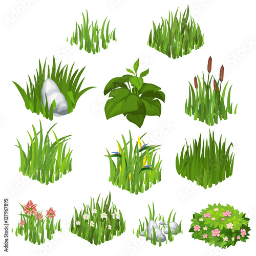 Fototapeta Vector collection of different grass and flowers