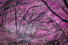An Amazing Pink Forest - Fantasy Picture