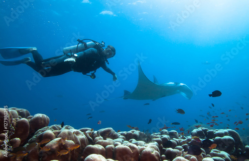 Garden Poster Diving Diver swimms with manta ray