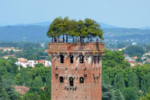 Guinigi Tower In  Lucca,Italy