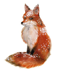 FototapetaFox in the snow isolated in a white background, watercolor
