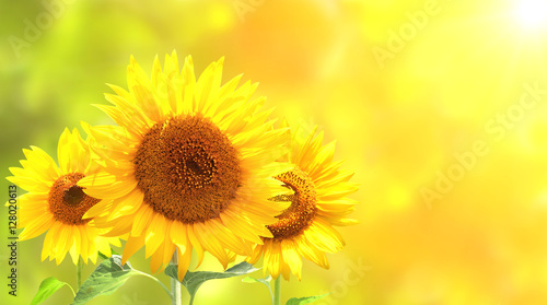 In de dag Zonnebloem Sunflowers on blurred sunny background