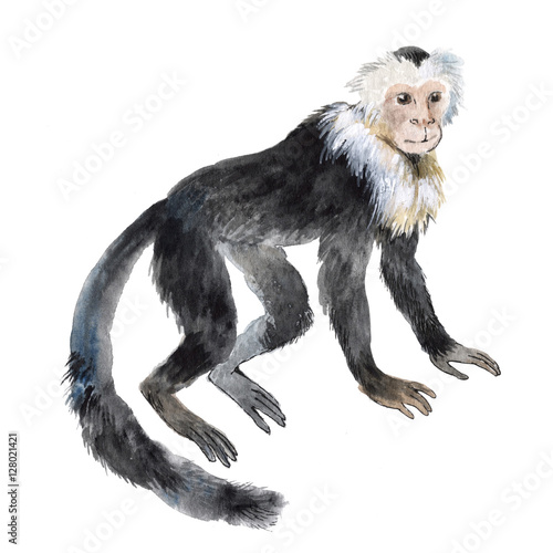 Photo  Capuchin monkey isolated on a white background, watercolor