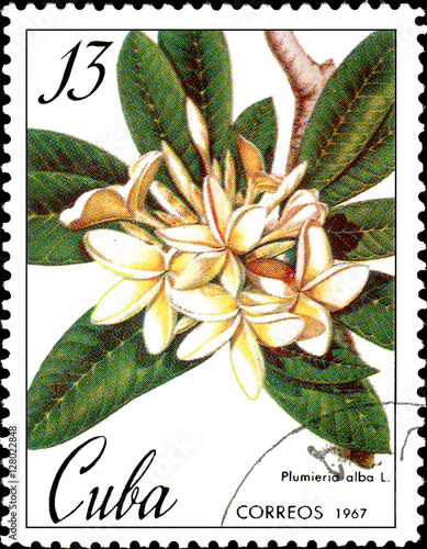 Fotografia  Stamp printed in Cuba shows image of a Plumieria alba, circa 1967