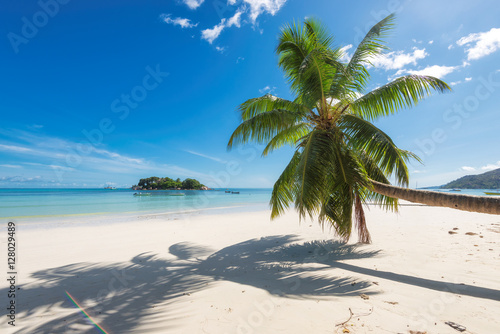 Door stickers Tropical beach Tropical beach with palm tree
