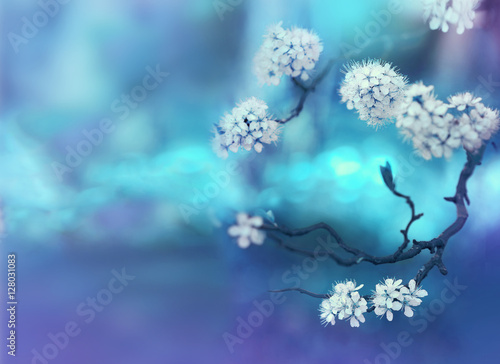 Fotobehang Bloemen Beautiful curved branches with white cherry flowers in spring close-up on a blue soft background. Light blue blurred floral background desktop wallpaper a postcard. Romantic gentle artistic image.