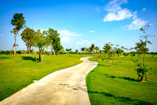 Cart Path In Garden Clear Sky And Coconut Tree Background