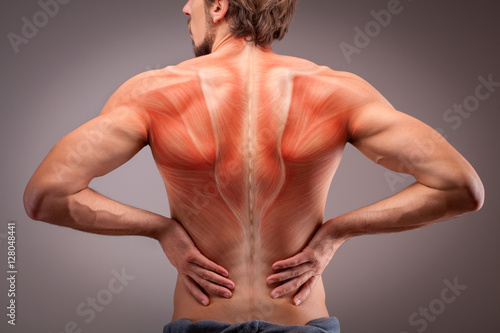 Fotografie, Obraz  Back view of athlete man torso with muscle structure