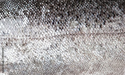 Foto op Canvas Vis Trout fish scale