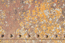 A Background Texture Or Overlay Of Rusted Metal With Lichen Grow