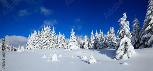 Foto-Leinwand ohne Rahmen - Tief verschneite unberührte Winterlandschaft, schneebedeckte Tannen, funkelnde Schneekristalle (von AVTG)