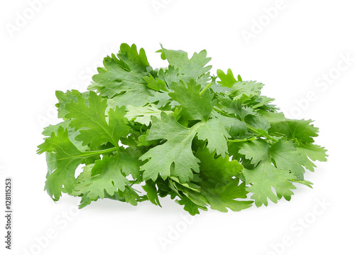 Coriander. Pile of coriander leaf isolated on white background