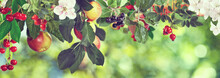 Image Of Sweet Apples And Cherries On A Tree,