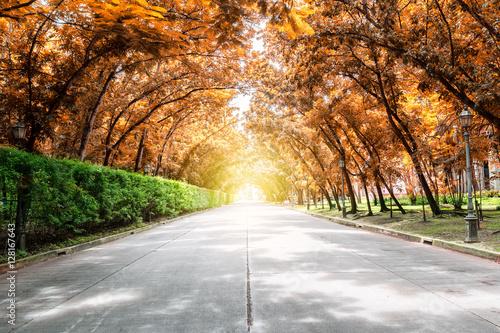 Plakat tunel drzewo z promieni słonecznych, jesień lanscape
