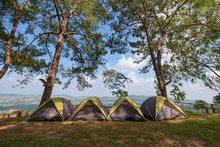 Camping And Tent Under The Pine Forest At Viewpoint Khao Kho Roy