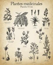 Gravures Anciennes Plantes Médicinales N°1/10