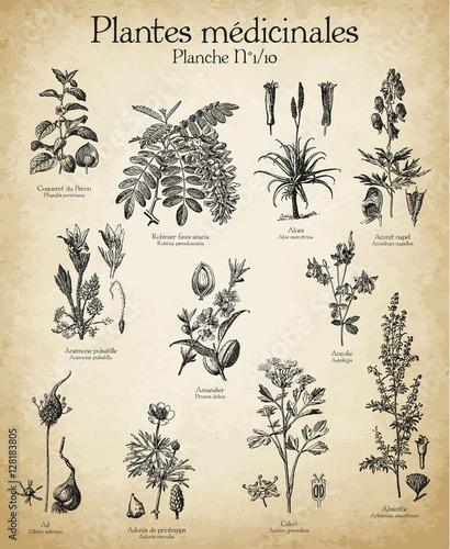 Gravures anciennes plantes médicinales N°1/10 Fototapete