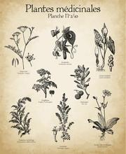 Gravures Anciennes Plantes Médicinales N°2/10
