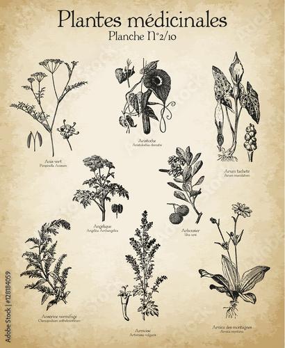 Leinwand Poster Gravures anciennes plantes médicinales N°2/10