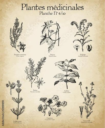 Fotografie, Obraz  Gravures anciennes plantes médicinales N°4/10