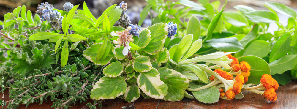 Fototapety, obrazy: Variety of herbs on wooden background, banner