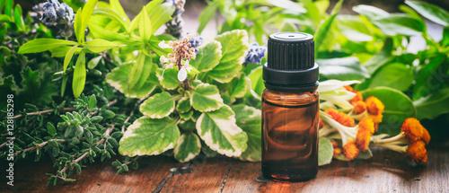 Fototapeta Variety of herbs and oil on wooden background, banner obraz
