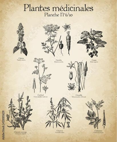 Foto  Gravures anciennes plantes médicinales N°6/10