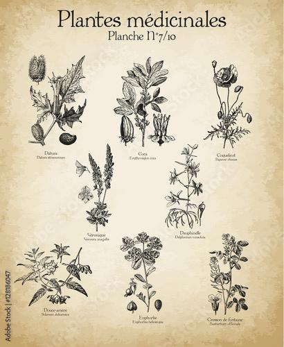 Leinwand Poster Gravures anciennes plantes médicinales N°7/10